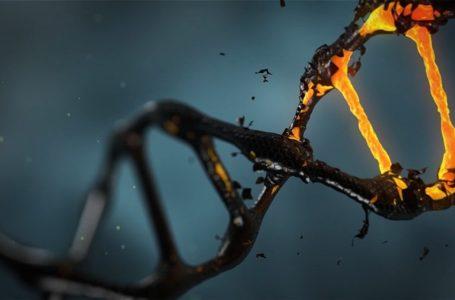 Projeto brasileiro pretende mapear genoma de 15 mil pessoas para prever e tratar doenças