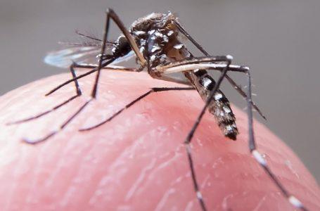Secretaria de saúde do RN define Dia D de combate ao mosquito Aedes aegypti