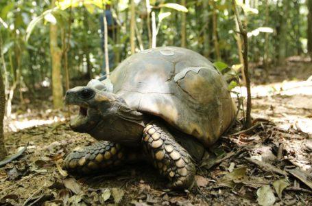 CORONAVÍRUS: Ministério do Meio Ambiente suspende visitação a parques nacionais