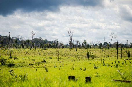 Alertas de desmatamento na Amazônia crescem 63,75% em abril
