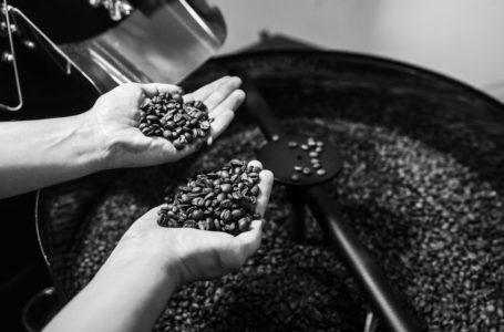 Exportação de café cai 3,6% na safra 2019-2020, mas bate recorde