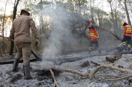 Chuva aumenta umidade e ajuda a amenizar incêndios no Pantanal