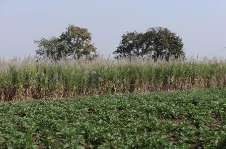 Brasil terá cota adicional na exportação de açúcar aos EUA