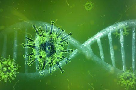 Confirmados dois casos da nova variante do coronavírus em São Paulo
