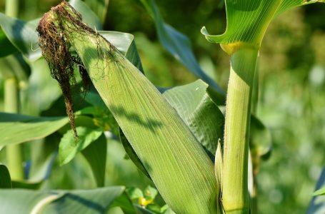 Governo Federal zera imposto de importação da soja e do milho