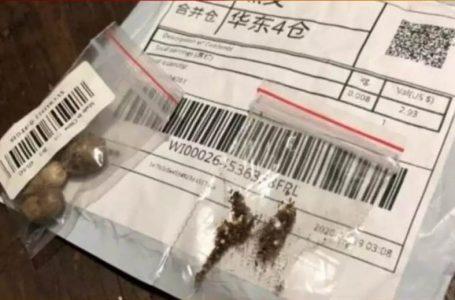 China nega envio de sementes misteriosas ao Brasil e diz que vai cooperar com investigação