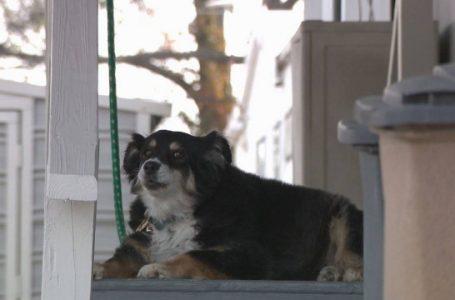 Cachorra de 8 anos herda fundo de R$ 26 milhões nos Estados Unidos