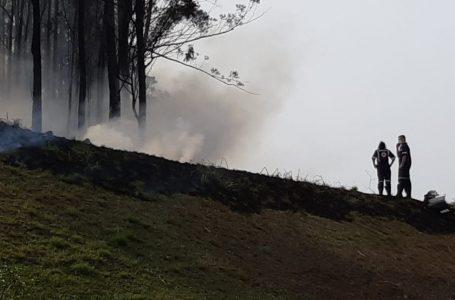 Avião cai em área de mata no interior de São Paulo: VEJA VÍDEO