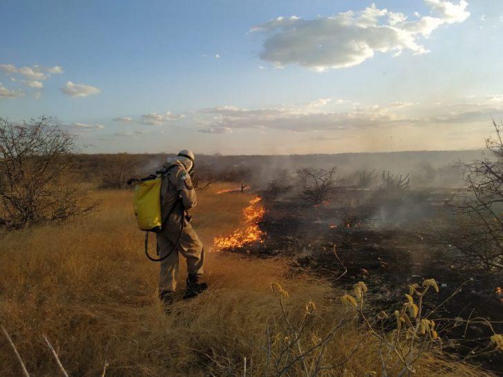 Incêndios florestais tem alta considerável no RN - Foto: Reprodução/g1